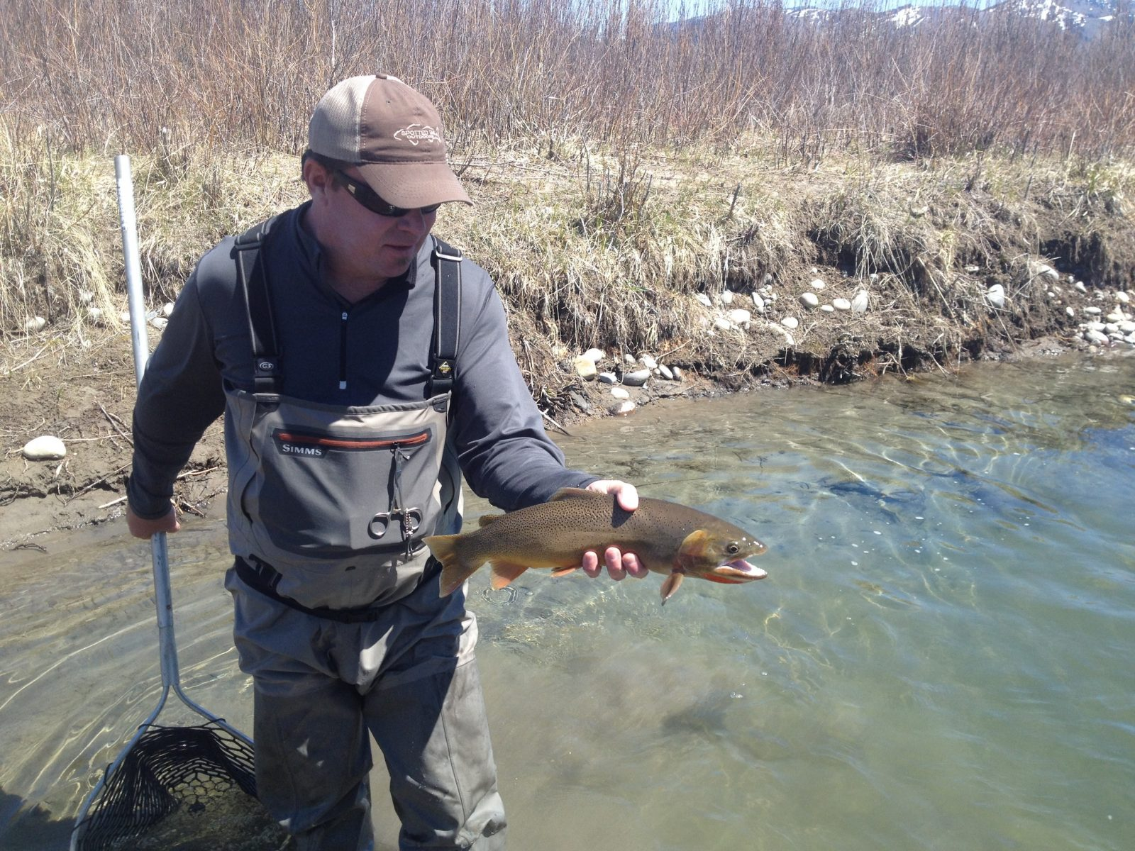 Snake river fishing report 3 reel deal anglers for Jackson hole fly fishing