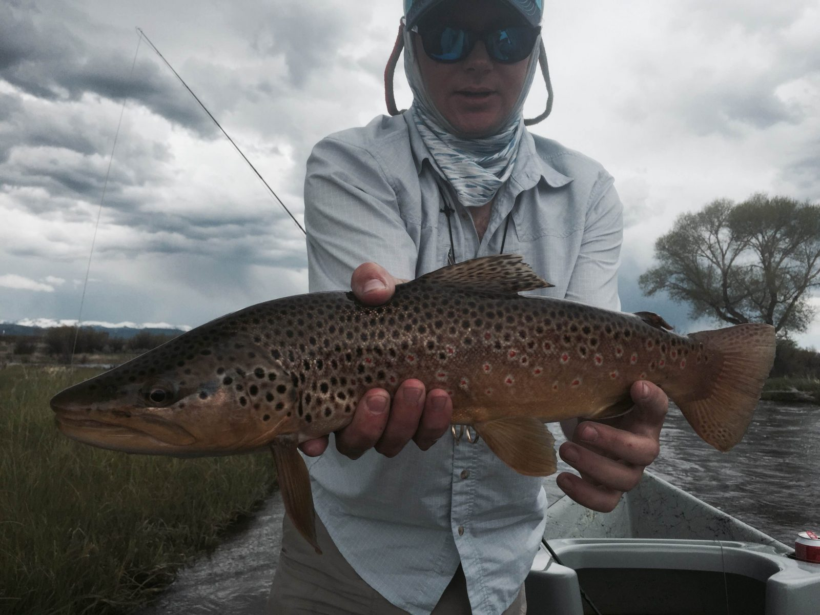 New fork river fishing report reel deal anglers for Weekly fishing report mi