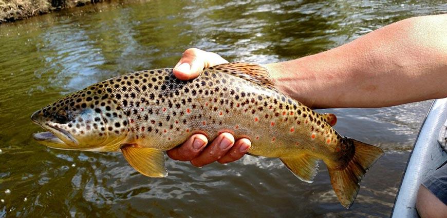 jackson-hole-wyoming-fly-fishing